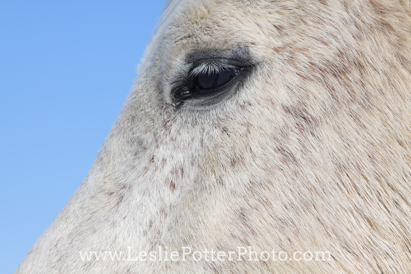 Closeup of Horse Eye