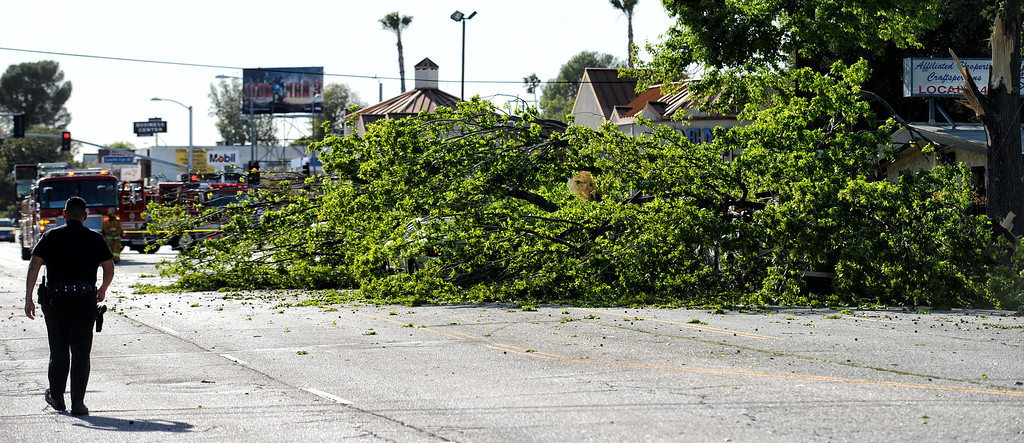 . A large part of a tree covers the road at 12021 Riverside Dr. in North Hollywood Monday, April 8, 2013. No injures were reported but at least two cars were damaged by the tree. (Hans Gutknecht/Staff Photographer)