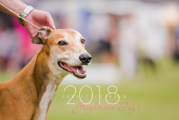 Donaueschingen-Greyhounds 04/08/18