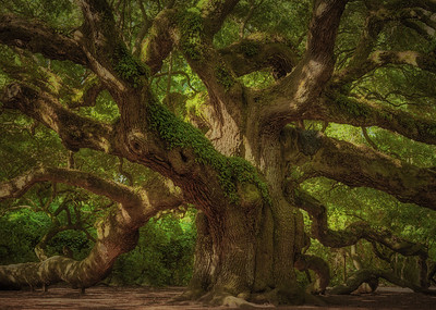 Angel Oak 010, 08/08/2016