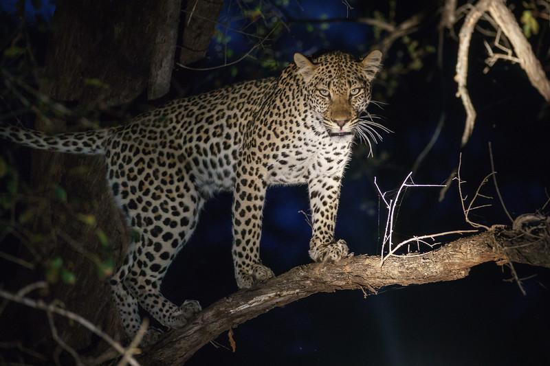 LeopardHills-20171022-1048.jpg