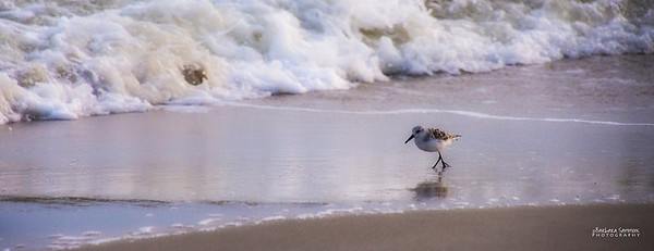 Sanderling - Yaupon Beach, Oak Island