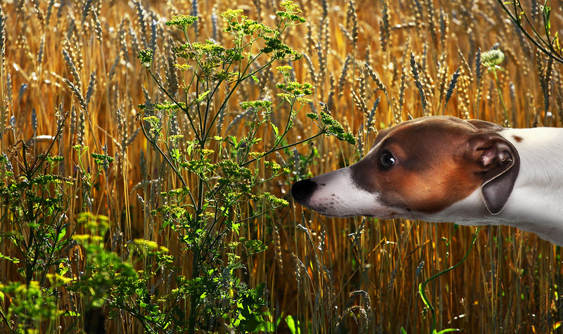 dog-snif.jpg