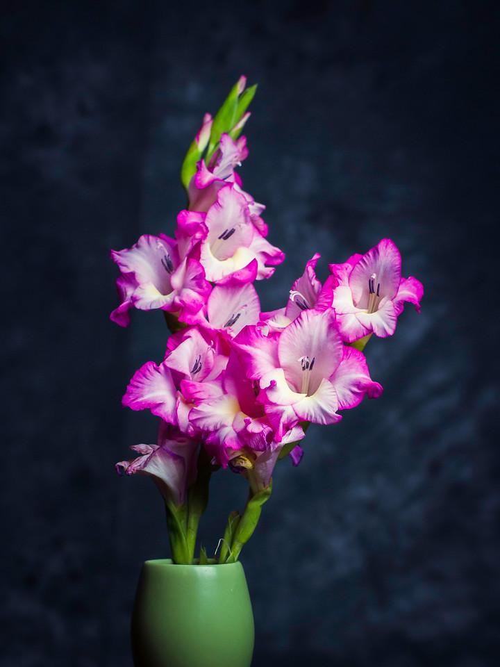 菖兰花,细细观赏