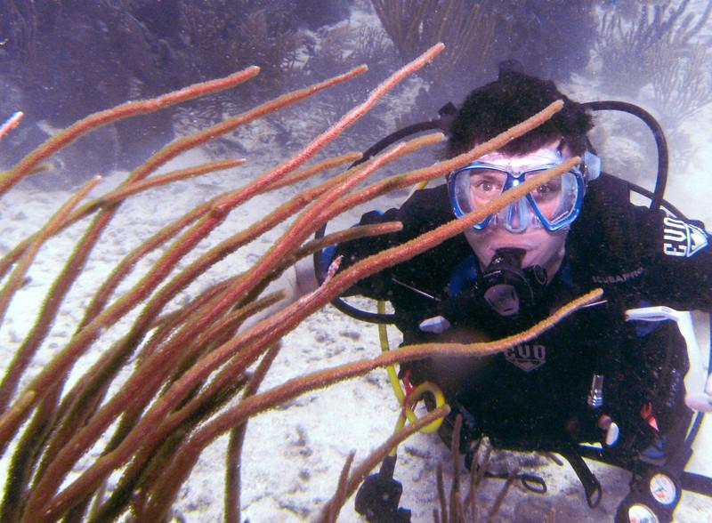 Dive Puerto Rico = Feb., 2013-Puerto Rico Dive Feb 2013-92-013.jpg