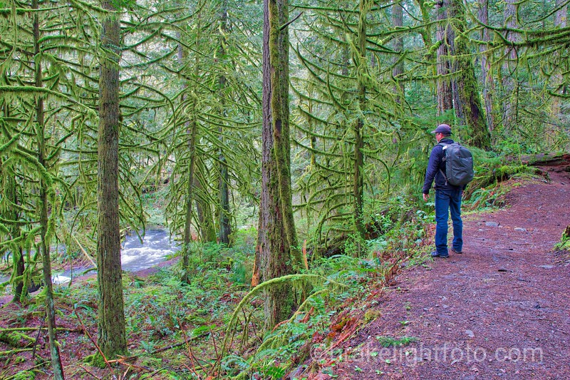 Upper Goldstream Trail