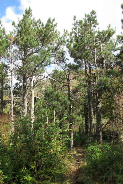 Art Loeb Trail -- 5,830'