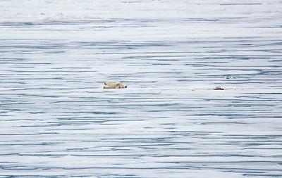 Polar Bear 3 and Seal 6/23