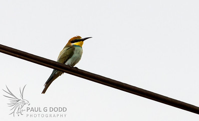 Pretoria-Kruger, Oct 2013