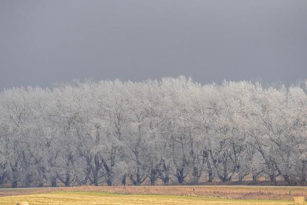 10-30-14 Hoar Frost