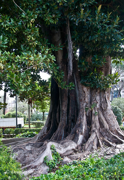Tue 3/15 in Seville: Solid roots on this old-timer