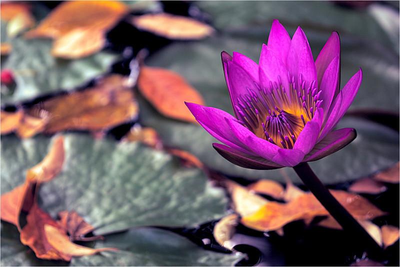 20110926_Flower_5.jpg