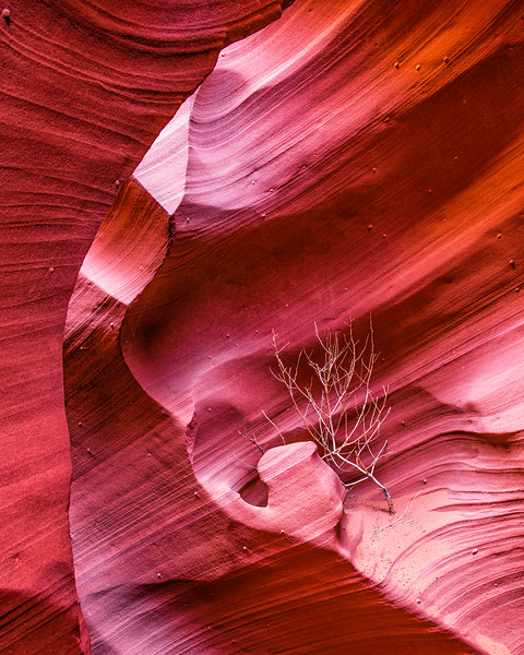 Arizona - Slot Canyons & Horseshoe Bend