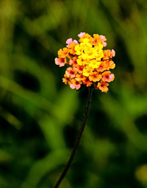 solitaryflowerbunch.jpg