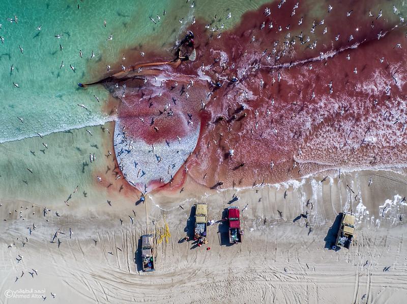 Sardine Season (63)- Dhofar.jpg
