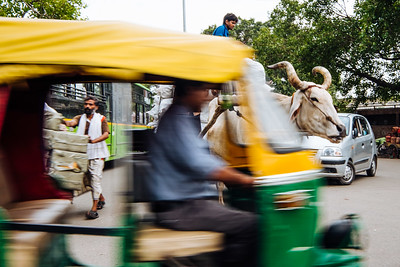 Movement. The essence of Old Delhi