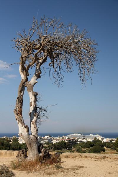 This tree looked impressive.