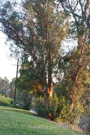 Orange County, California Scenery