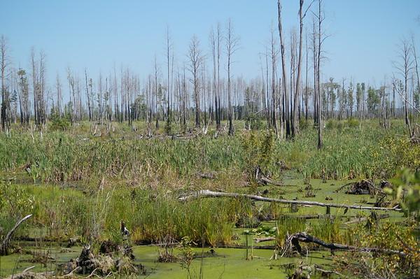 Okefenokee Swamp 2014