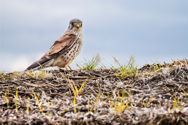 Birds in Burgenland