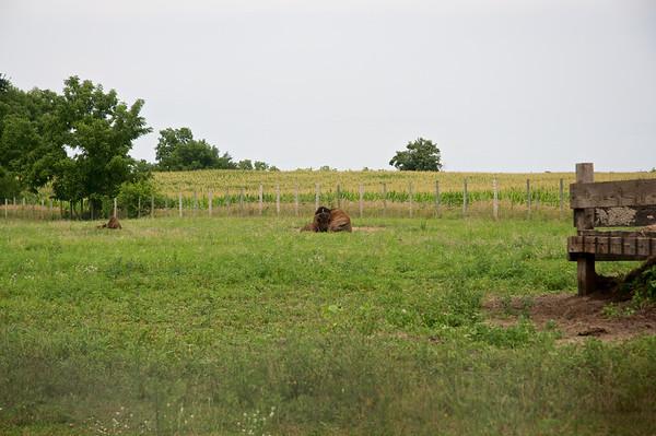 Iowa 2013