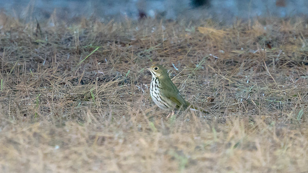 Imperial Beach Birding 11/17/2018