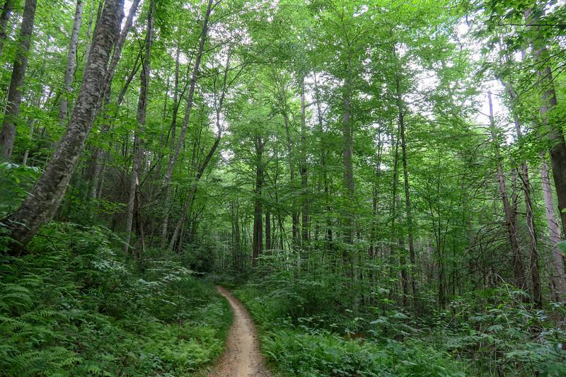 Grassy Road Trail (#364)