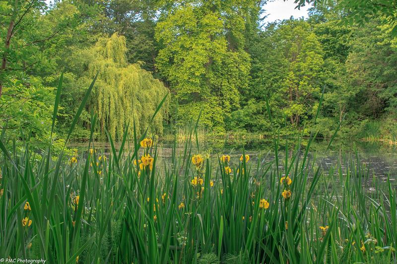 Upper Trout Pond at Hatley Estate