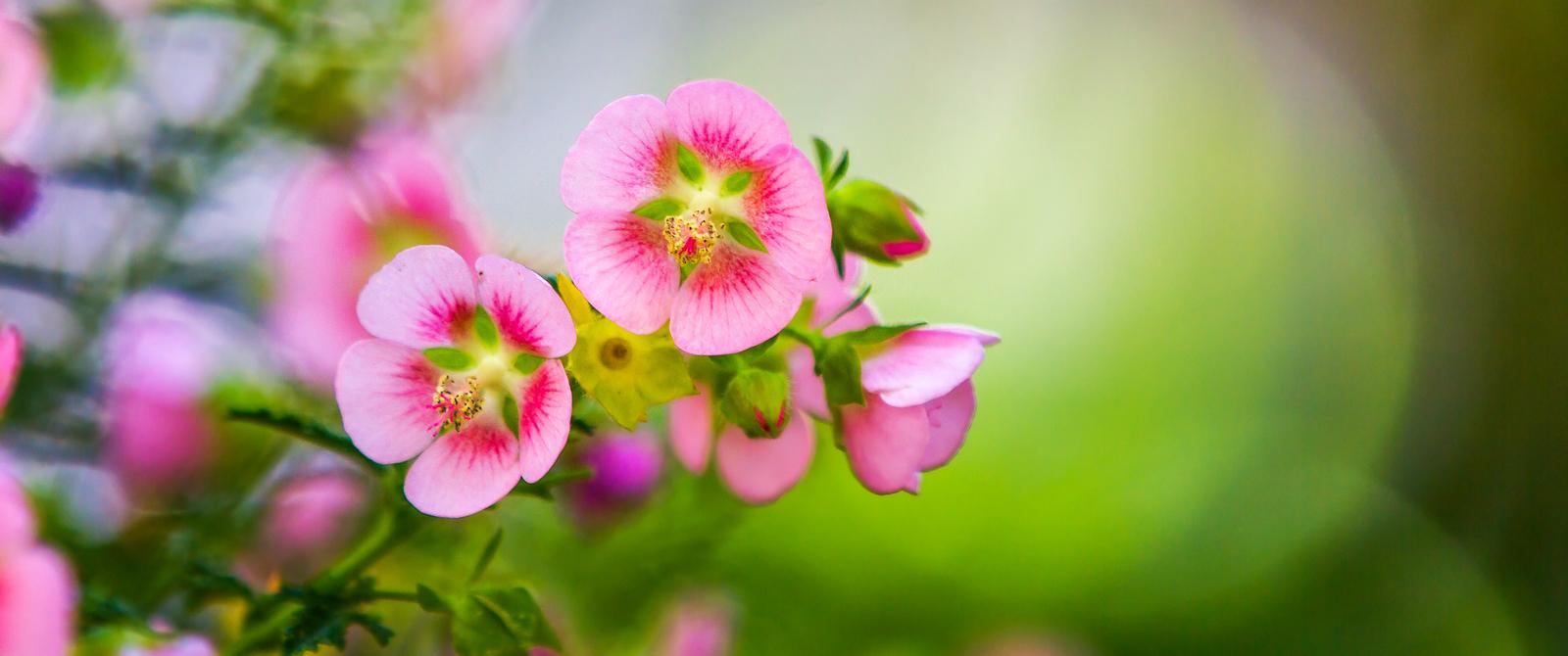 送上鲜花,祝母亲节快乐