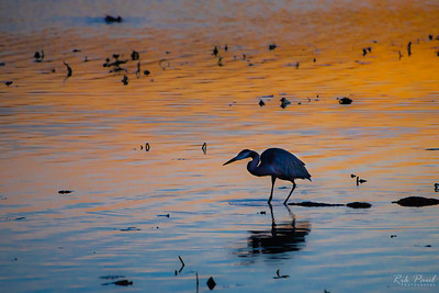 Waterfowl, deer, & other critters