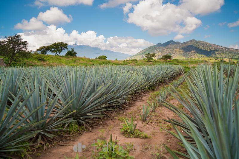 tequila-1-2.jpg