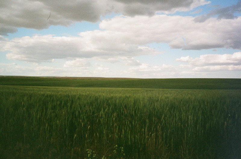 Palouse Fields - Portra 800 Film - #we35