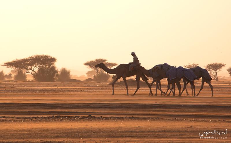 Oman (202).jpg