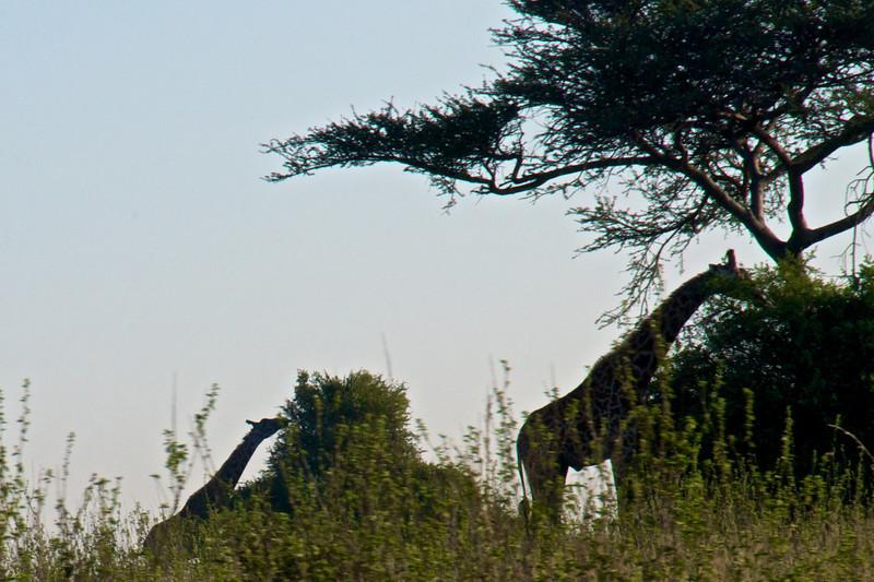 Kenya.Card1.02.2014 527