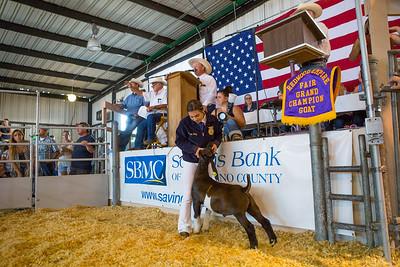 Junior Livestock Auction Grand Champions