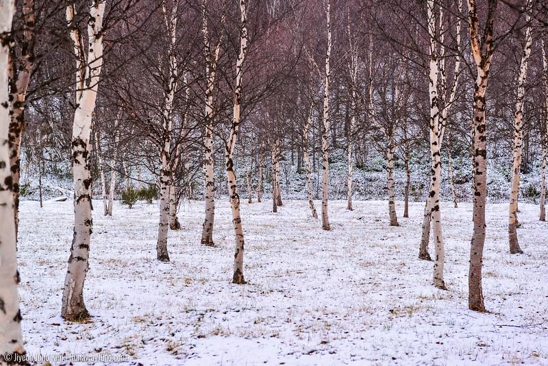 Nov.11_Utsjoki-6105868.jpg
