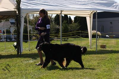 7-9yr Veteran Dogs