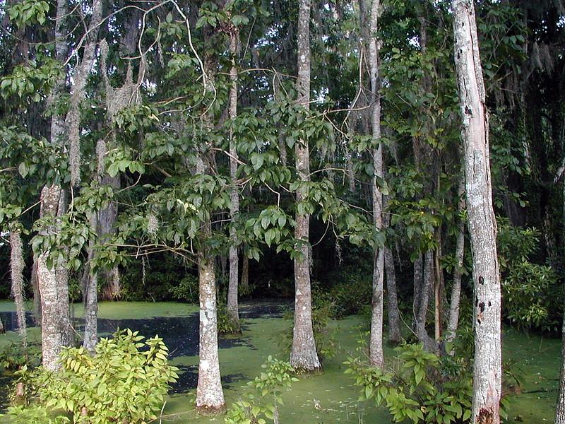 Mississippi River Wildlife MN (1).jpg