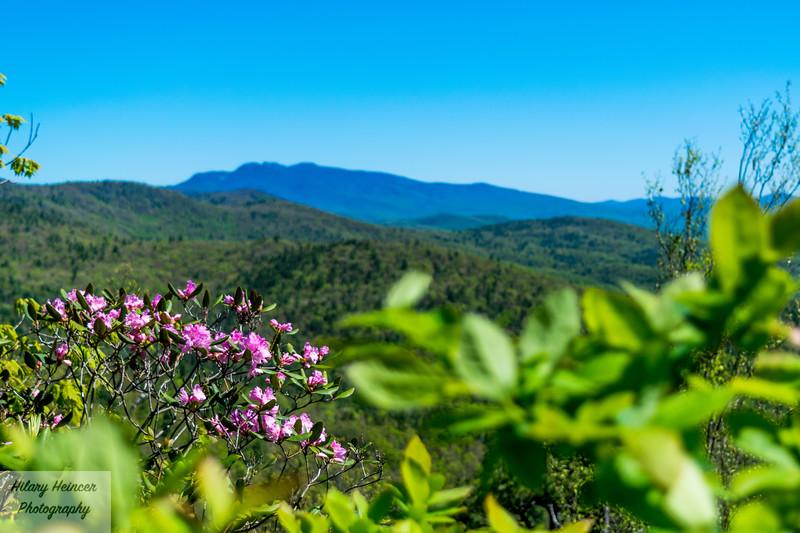 Hawksbill Trail View 1
