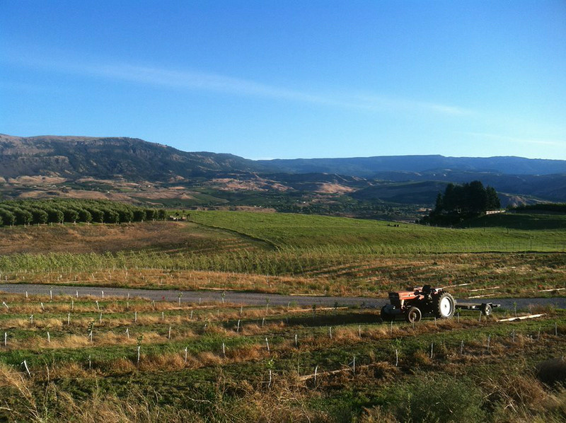 . Overlooking Snowdrift Cider\'s apple and pear orchards in East Wenatchee, Washington. (Photo provided by Snowdrift Cider)