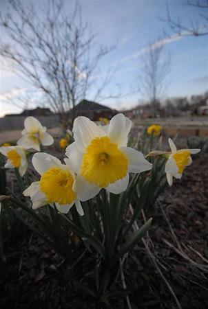 Spring 2007