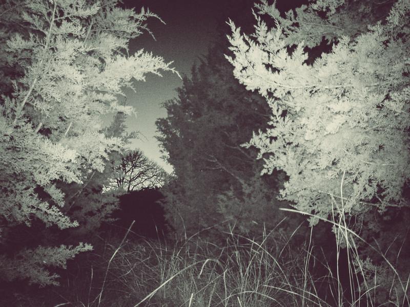 Backyard Nature Cam - Jan 11, 2018, 6:33pm