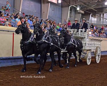 Gelding 4 Horse Hitch
