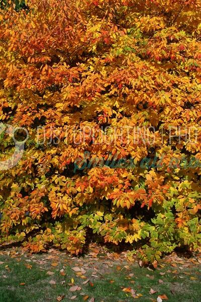 Orange Leaves_batch_batch.jpg