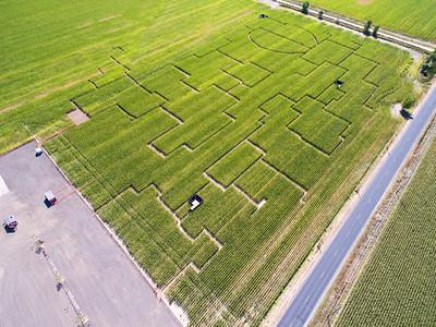 Northern Colorado Corn Maze 2015