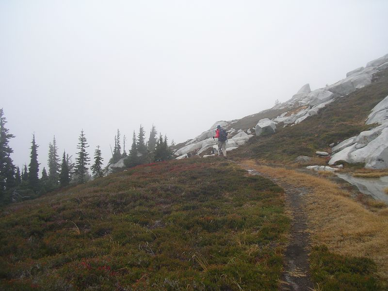 Pretty trail through heather from Granite to Trico.