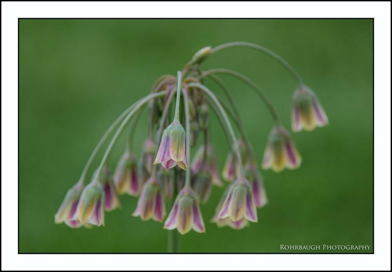 Rohrbaugh Photography Flowers 99.jpg
