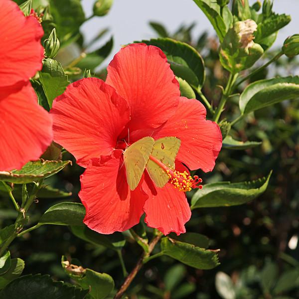 FlowerXXXX.jpg