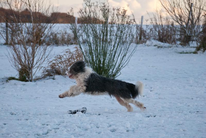 Snow Dog-0063