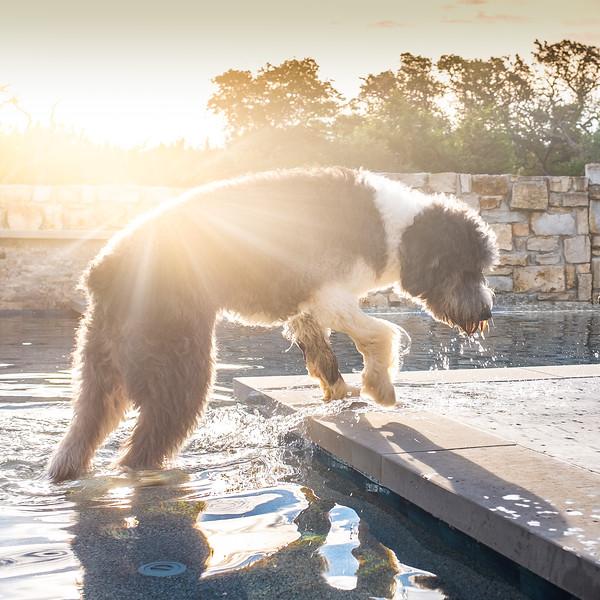Austin Dogs-3.jpg